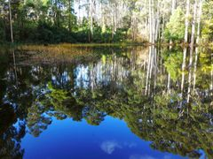 Reflections 2 - Sanatorium Lake by <b>Peter Ermel</b> ( a Panoramio image )
