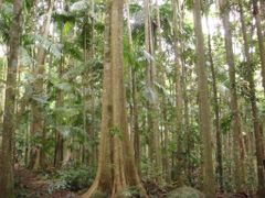 Rainforest by <b>Fritz77</b> ( a Panoramio image )