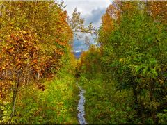 birch forest path 1 (lomno) by <b>Lomno</b> ( a Panoramio image )
