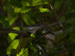 Carpet snake by <b>neonblade</b> ( a Panoramio image )