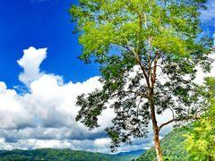 Beautiful day @ Pak Chom - Chiang Khan Road by <b>::::=UT=::::</b> ( a Panoramio image )