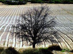 Citrusdal, South Africa  by <b>van vuuren</b> ( a Panoramio image )