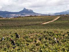 La vendimia - Para Mer, muchas felicidades by <b>losdosacuarios</b> ( a Panoramio image )