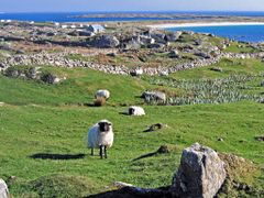 Errisbeg West, Galway, Ireland by <b>Pom-Panoramio? YES !</b> ( a Panoramio image )