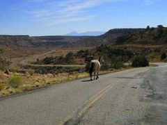 wild horse of the Navajo Nation by <b>adoverboy2</b> ( a Panoramio image )