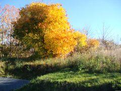 Barwy jesieni  ==  colors of autumn by <b>Dworzanski.Gryfino</b> ( a Panoramio image )