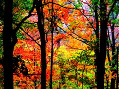 When autumn leaves start to fall by <b>S?m?d</b> ( a Panoramio image )
