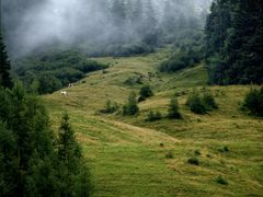 Alpine meadow by <b>Pixelbug</b> ( a Panoramio image )