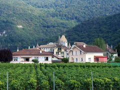 "Castle Aigle,Le Chateau d""Aigle and vineyards by <b>Michael  D</b> ( a Panoramio image )"