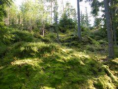 Waldleben Lilla Nas in Schweden by <b>Bonsaifreund</b> ( a Panoramio image )