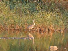 Wetland Artemis Attica by <b>varkos</b> ( a Panoramio image )