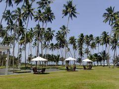 Wadduwa - Sri Lanka by <b>brussels100</b> ( a Panoramio image )