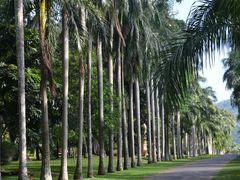 Kandy - Sri lanka by <b>brussels100</b> ( a Panoramio image )