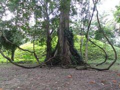 Nuevamente la naturaleza sorprende by <b>AnaMariaOss</b> ( a Panoramio image )