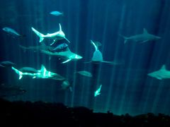Sharks... and only this!! by <b>~?slavva?~</b> ( a Panoramio image )