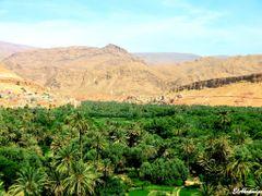La palmeraie de Tinghir by <b>elakramine</b> ( a Panoramio image )