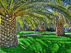 OAZA by <b>luky9</b> ( a Panoramio image )