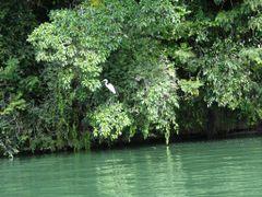 Ibis en una rama by <b>AnaMariaOss</b> ( a Panoramio image )