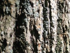 Face in Bark (look in the centre) by <b>Available light</b> ( a Panoramio image )