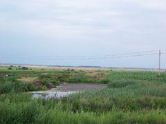Шпаки на проводах by <b>Igor Kozolup</b> ( a Panoramio image )