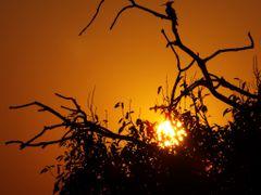 Sunset Madhwapur village Uttar Pradesh India by <b>Jawed Hasan</b> ( a Panoramio image )