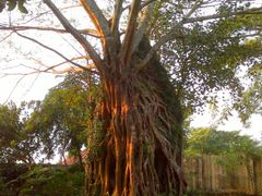 Unique Banyan Tree 02 by <b>Faysal Bin Darul</b> ( a Panoramio image )