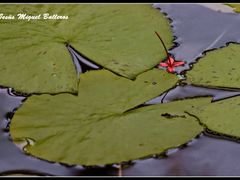 * La Roja Flor by <b>Jesus Miguel Balleros</b> ( a Panoramio image )
