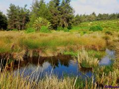 Bouskoura Forest  – Hybrid GPS by <b>elakramine</b> ( a Panoramio image )