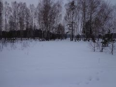 Березки by <b>KoNDoR</b> ( a Panoramio image )