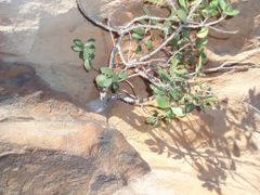 Life finds a spot to cling onto and grow. Even onto solid rock. by <b>Left Knee</b> ( a Panoramio image )