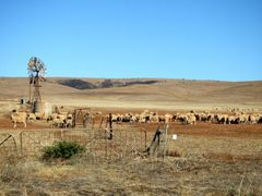 South Australian Countryside by <b>nipper30</b> ( a Panoramio image )
