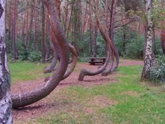Distorted forest by <b>StasiO</b> ( a Panoramio image )