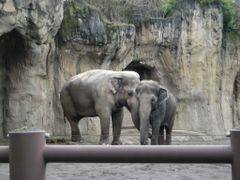 Two elephants, enjoying the warmth of the day... by <b>Kiz</b> ( a Panoramio image )