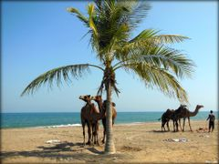 On the Beach!  ....{by Bassam} by <b>~Bassam</b> ( a Panoramio image )
