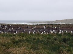 Gentoo Penguin colony on Sealion Island by <b>Edward Rooks</b> ( a Panoramio image )