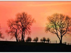 Corstown Trees by <b>Jack Clarke</b> ( a Panoramio image )