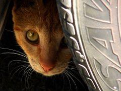 Hiding behind a car by <b>Gabriela Gleizer</b> ( a Panoramio image )