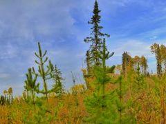 Fall time along Tumbler Ridge by <b>E4N Photography</b> ( a Panoramio image )
