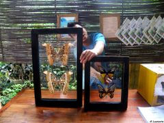 Simply Butterflies Conservation Center - Poblacion, Bilar Bohol, by <b>jolasolotrips</b> ( a Panoramio image )