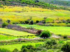 Farm near Clanwilliam by <b>van vuuren</b> ( a Panoramio image )