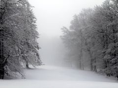Fog by <b>geberle</b> ( a Panoramio image )