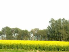 Colours of spring! by <b>Jawed Hasan</b> ( a Panoramio image )