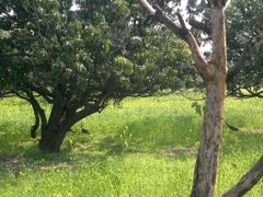 Indian Nature by <b>Jawed Hasan</b> ( a Panoramio image )
