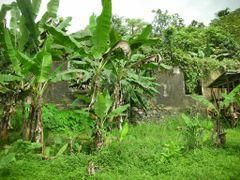 Sao Tome & Principe - Old Portuguese check point - Nov 12 by <b>Filippo Aragone</b> ( a Panoramio image )