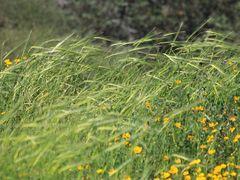 2008-03Poleg by <b>oagiv</b> ( a Panoramio image )