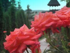 Rozsak by <b>- - - M.Balazs - - -</b> ( a Panoramio image )