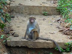 Monkey watching the fruit shop by <b>baba49</b> ( a Panoramio image )