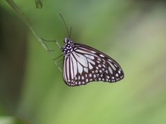 Butterfly by <b>travelminds</b> ( a Panoramio image )