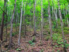 Manmade Forest by <b>travelminds</b> ( a Panoramio image )