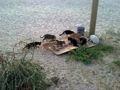 "Dinner for cats from the cafe ""Sea Pearl"" by <b>all_mir</b> ( a Panoramio image )"